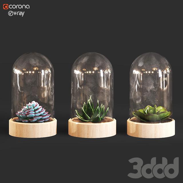 decor plant_02