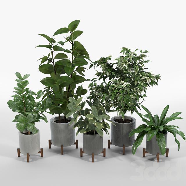 Bungalow Planter Collection