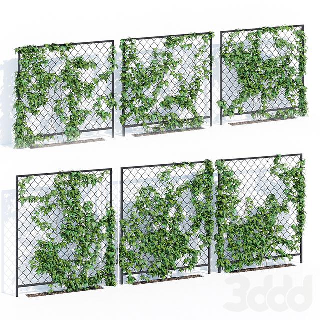 Ivy wall three