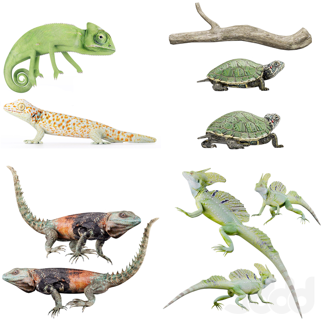 Reptile Collection, set