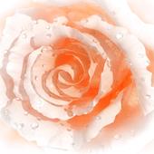Цветочек аленькай