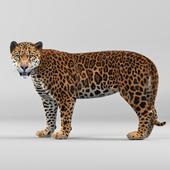 Panther onca