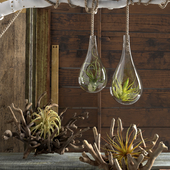 Air Plants Compisition (from reference)