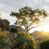 Композиция старого дерево в горах