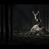 Sacred deer