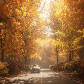 Warm soul of my autumn work