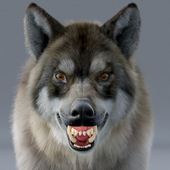 High detail and realistic Wolf model.