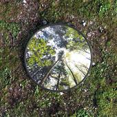 Отражение природы