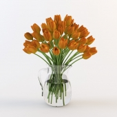 Tulips in the jug