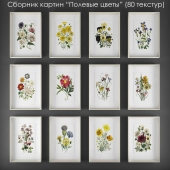 """Collection of paintings """"wildflowers"""""""