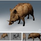 LOW boar