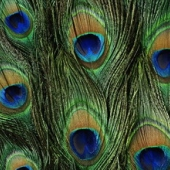 Текстуры животных шкуры оперенья кожа
