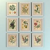 """Картины """"Ботаника"""""""