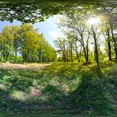 HDRI Forest