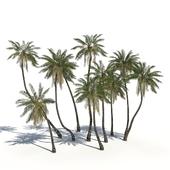 Coconut Palms + animation