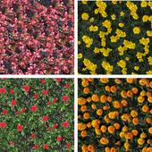 текстуры цветов на клумбах