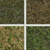 seamless texture of grass