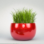 Decorative grass in pots