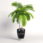 Double palm trees in a pot