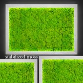 Stabilized moss.