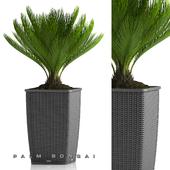PALM BONSAI PLANTS 26