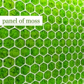 Stabilized moss. Panel