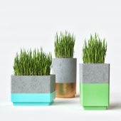 Pot with grass
