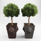 Декоративные деревья 2