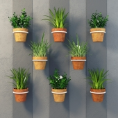 Clay pots with herbs on the wall