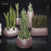 Gandiablasco - SAHARA - Sansevieria
