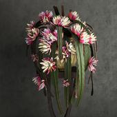 Epiphyllum / Эпифиллум