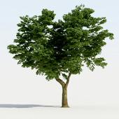 Broadleaf Tree 01