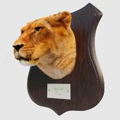 Чучело головы львицы