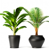 banana and coconut palm