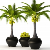 Coconut palm set 2