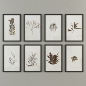 MARINE FLORA PRESSINGS ART