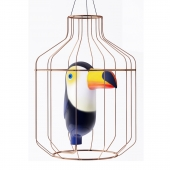 Toucan in a Golden cage