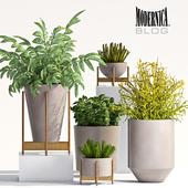 PLANT SET - 66