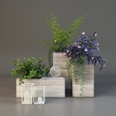 Decor set with plants