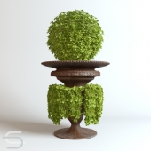 Plant CEDE 06