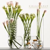 CALLA LILY 3