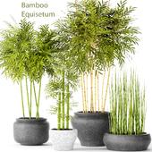 """Contest"" Bamboo and Equisetum"