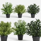 plants set