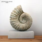 Large Ammonite Mounted on a Limestone Base
