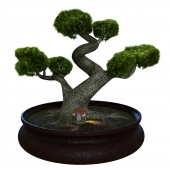 Bonsai tree and home