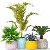 Collection of plants in pots