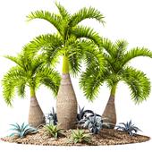 Тропическая сад.