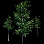 Молодые деревья, саженцы