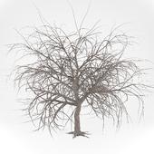 Голое дерево