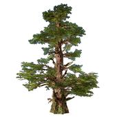 Western Pines (2 trees inside)